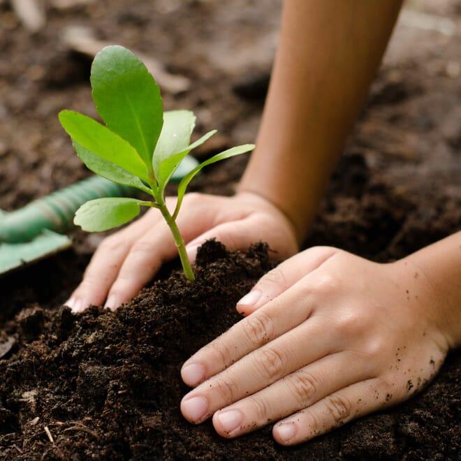 Plant-hands