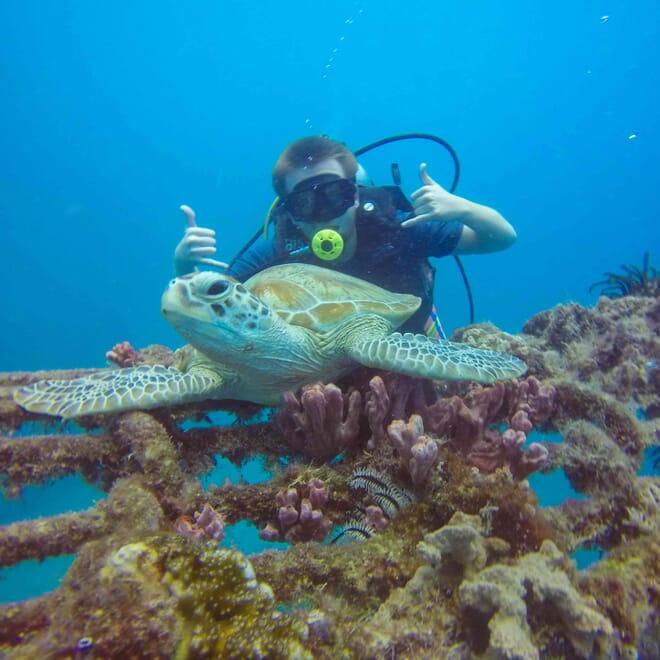 scuba-turtle
